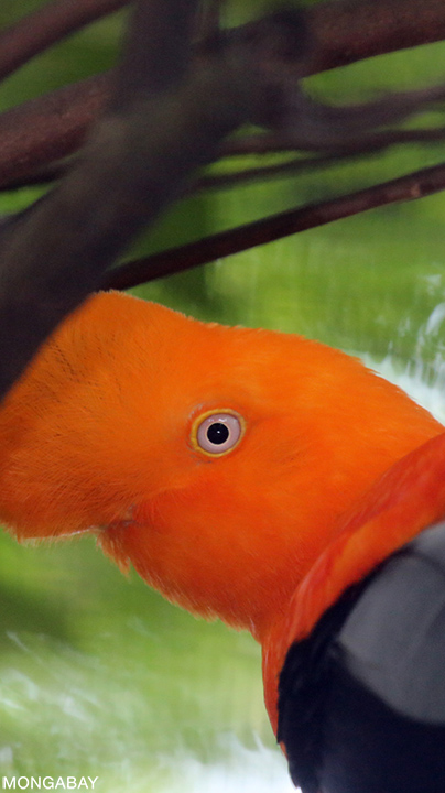 Visiting the Amazon Rainforest