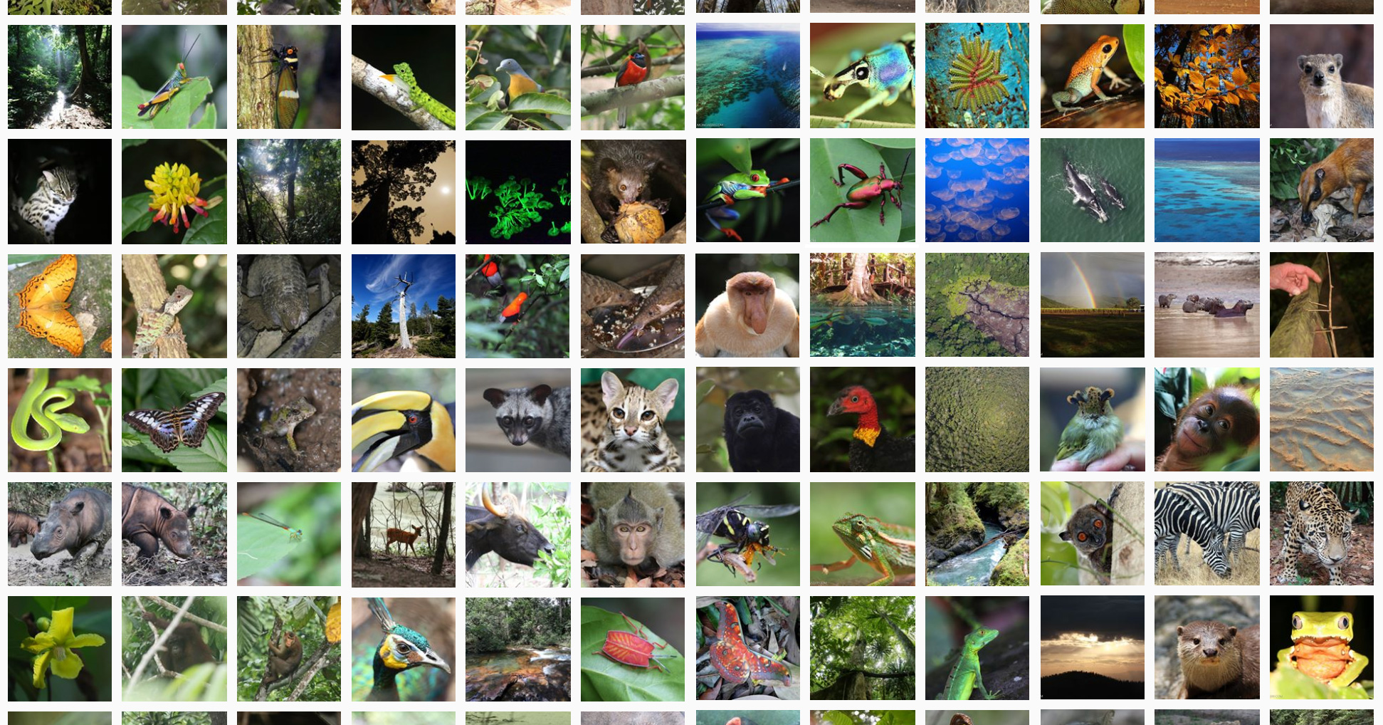 Why do rainforests have so many kinds of plants and animals?