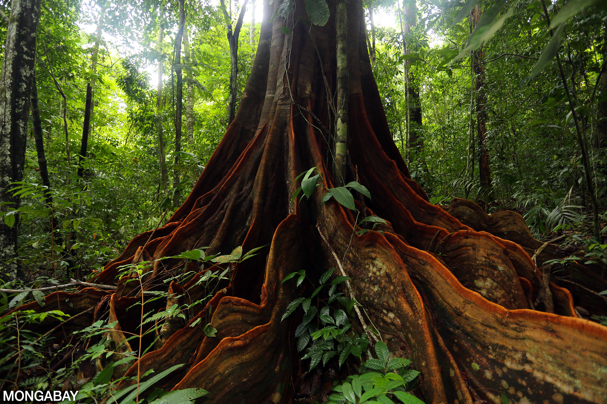 The Ground Layer Of The Rainforest