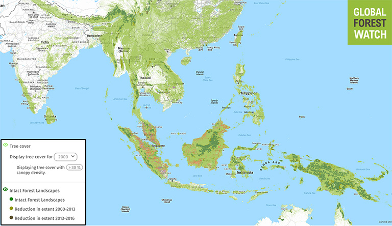 Map showing world distribution of rainforests.