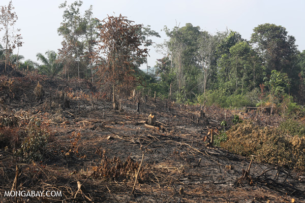 Forest clearing for oil palm in Sumatra. Photo: Rhett Butler