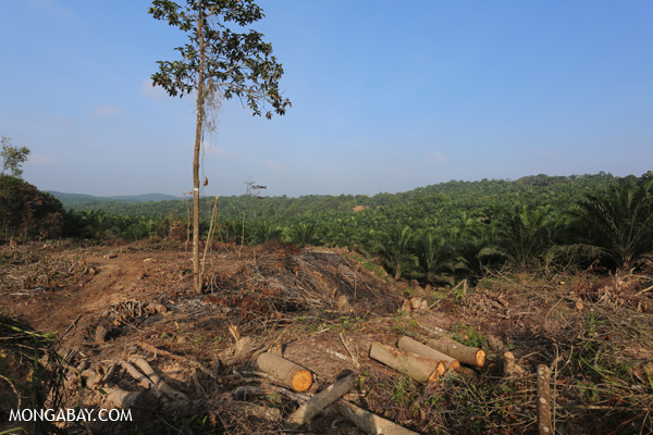 Forest clearing for oil palm in Indonesia's Riau province on the island of Sumatra. Photo: Rhett A. Butler