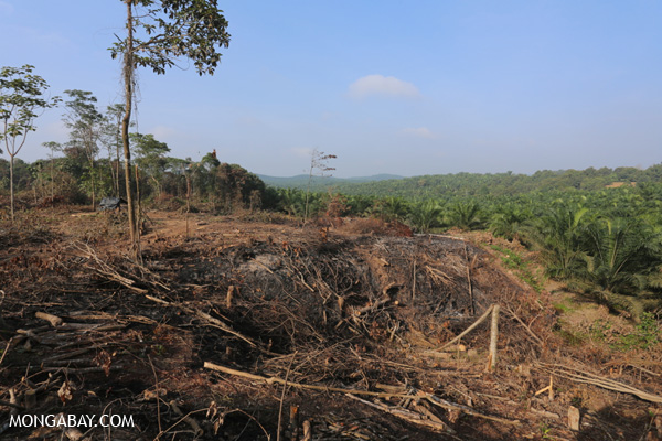 Clearing for oil palm in Riau Province, Indonesia.