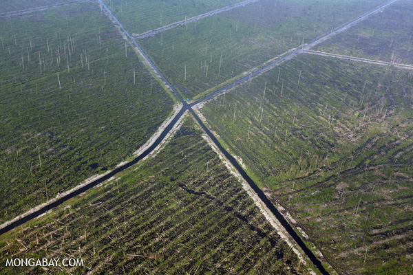 Indonesia now has the world's highest forest loss. Here, peat forest has been cleared in Sumatra. Peat forest is hugely biodiverse and contains significant stores of carbon. Photo by: Rhett A. Butler.
