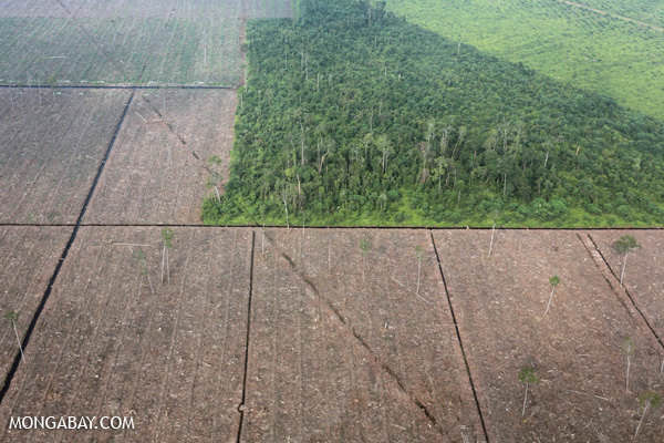 Fragment of peat forest amid a landscape of land cleared for plantations in Riau, Indonesia in February 2014.