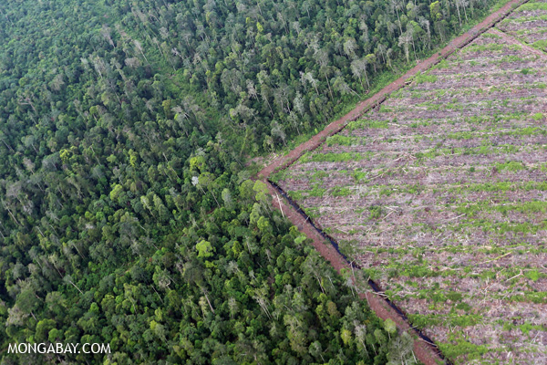 Deforestation for woodpulp production in Sumatra, Indonesia