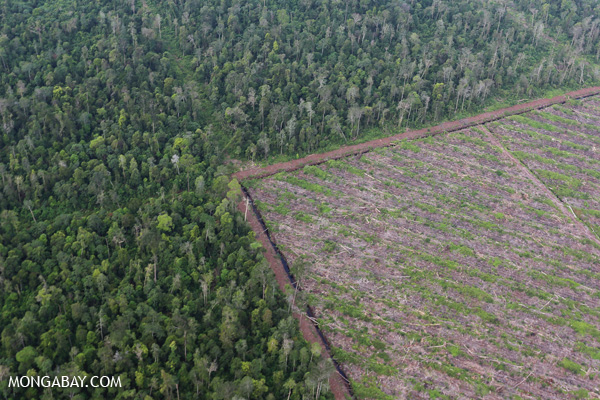 Deforestation for pulp and paper production in Indonesia