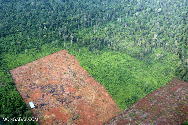 Land cleared for oil palm in Indonesia's Riau province. Photo: Rhett A. Butler