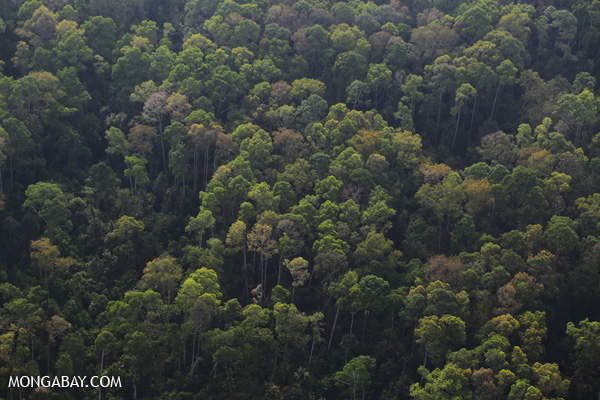 An aerial view of rainforest in Indonesia's Riau province. Photo: Rhett A. Butler