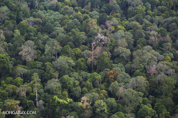 Rainforest in Indonesia's Riau province. Photo: Rhett A. Butler