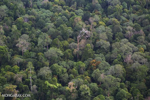Rainforest in Indonesia's Riau province. Photo: Rhett A. Butler