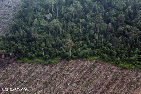 Deforestation in Riau.