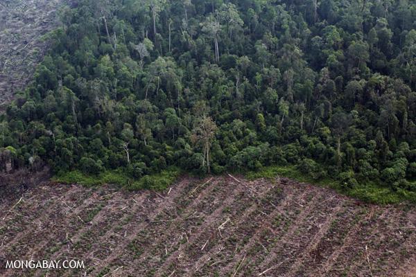 Desmatamento em Riau.