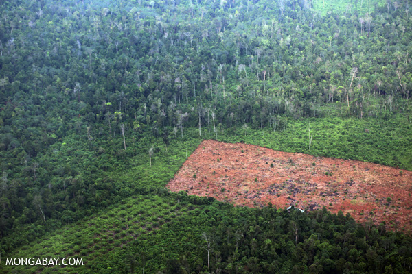 Deforestation for palm oil production in Riau, 2014.