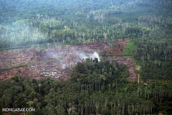 A peat fire burns in Riau. Photo: Rhett A. Butler