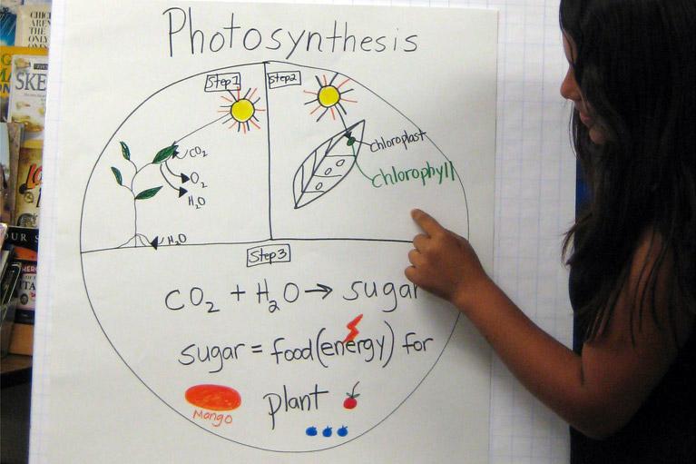 Activity 1 photosynthesis mobile environmental lessons for 3rd photosynthesis mobile ccuart Images