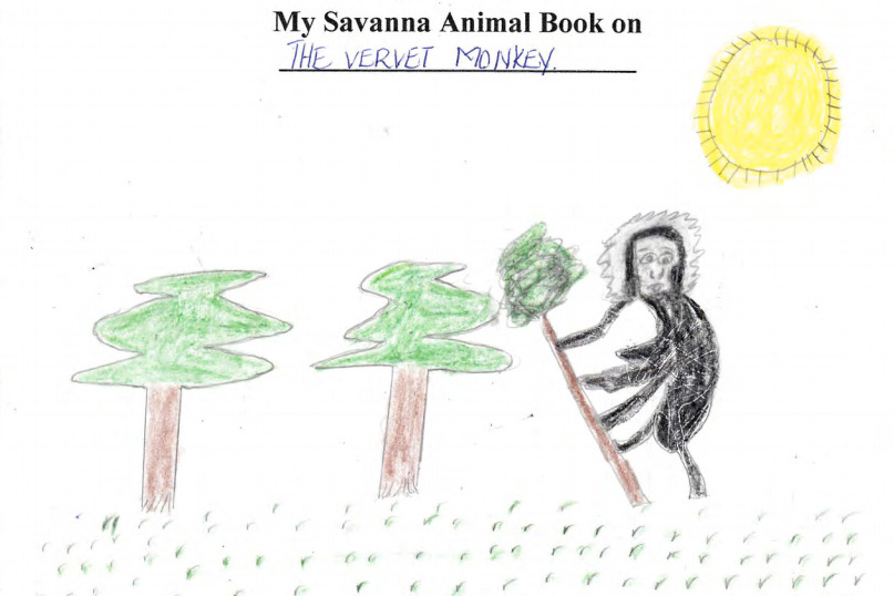 Vervet monkey animal book