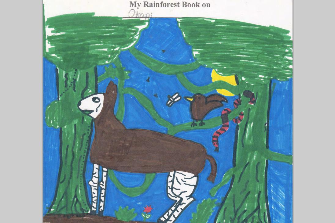 Student animal book on the okapi