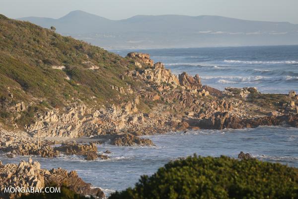 Hermanus coastline [south_africa_hermanus_0472]