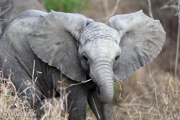 Nelson Mandela, elephants and youth