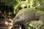 Monitor lizard statues (Ubud, Bali)