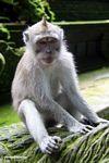 Macaques sitting on statue (Ubud, Bali)