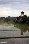 Rice field in Bali (Ubud, Bali) -- bali8367