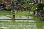Father and daughter preparing to fishing in a rice field (Ubud, Bali)