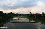 Rice field in the early evening (Ubud, Bali)