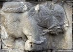 Wall carvings at Borobudur, elephant, horses (Java)