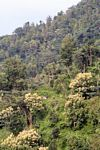 Small shack amid forest and tree crops in Java (Java)