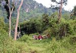 Local men returning from a day of working in the forest (Java)