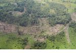Overhead view of deforestation for agricultural use in Borneo (Kalimantan, Borneo - Indonesian Borneo)