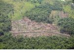 Aerial view of deforested jungle in Borneo (Kalimantan, Borneo - Indonesian Borneo)