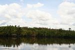 Nipa palms along the Seikonyer River (Kalimantan, Borneo - Indonesian Borneo) -- kali8922