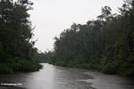 Falling rain on the Sekonyer River (Kalimantan, Borneo - Indonesian Borneo)