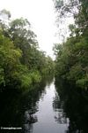 The blackwater river to Camp Leaky (Kalimantan, Borneo - Indonesian Borneo) -- kali9145