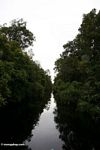 The forested blackwater river to Camp Leaky (Kalimantan, Borneo - Indonesian Borneo)