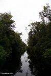 The blackwater river to Camp Leaky Orangutan Center (Kalimantan, Borneo - Indonesian Borneo)