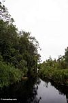 The blackwater river to Camp Leaky (Kalimantan, Borneo - Indonesian Borneo)