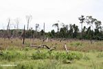 Area of rain forest that was slash-and-burned (Kalimantan, Borneo - Indonesian Borneo)