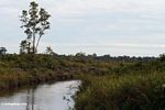 Deforested peat swamp (Kalimantan, Borneo - Indonesian Borneo)