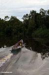 Boat heading up the  Sekonyer River (Kalimantan, Borneo - Indonesian Borneo)