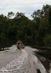 Boat heading up the  Sekonyer River (Kalimantan, Borneo - Indonesian Borneo) -- kali9960