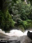 Bantimurung falls from atop the waterfall (Sulawesi - Celebes)