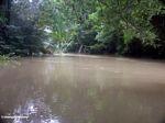 Bantimurung river (Sulawesi - Celebes)