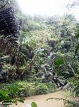 Bantimurung jungle (Sulawesi - Celebes)
