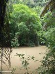 Bantimurung jungle (Sulawesi - Celebes) -- rb070
