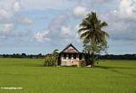 Sulawesi home outside of Ujung Pandang (Sulawesi - Celebes)