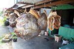 Dried fish market (Sulawesi - Celebes)